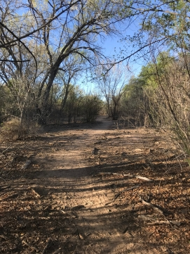 The Trail - Rio Grande - Albuquerque